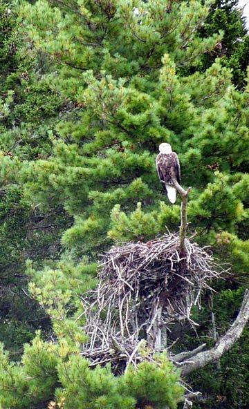 Eagle2012